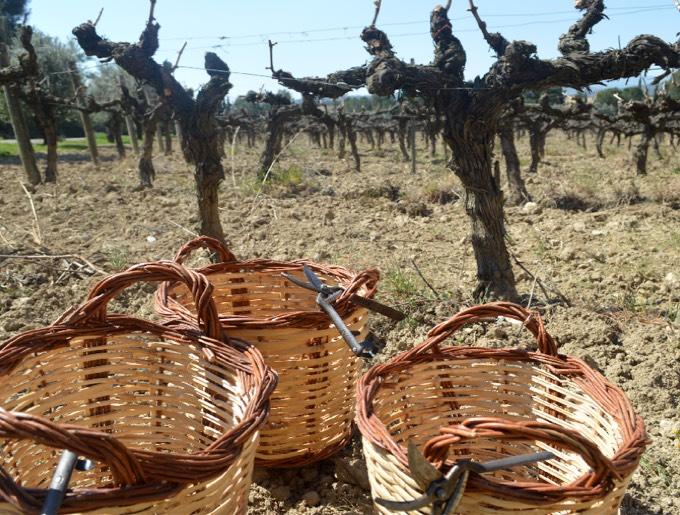 Vineyard and harvest workshop
